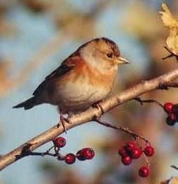 doux-chants-des-oiseaux.jpg